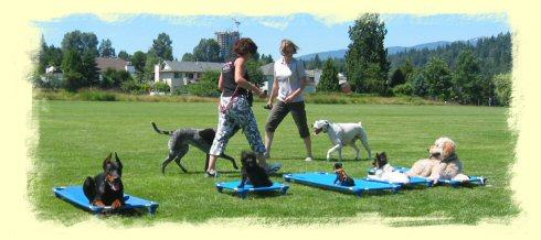 Maple Ridge Dog Training