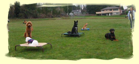 Dog Obedience Training Pitt Meadows