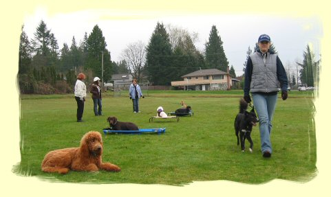 Dog Obedience Training Port Moody
