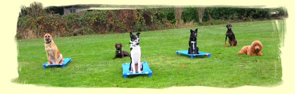 Dog Obedience Training Maple Ridge