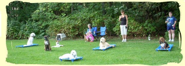 Dog Training Port Coquitlam, B.C.