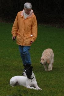 Dog Training, Pitt Meadows, B.C.