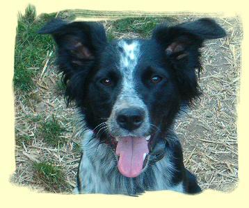 Dog Training Port Moody