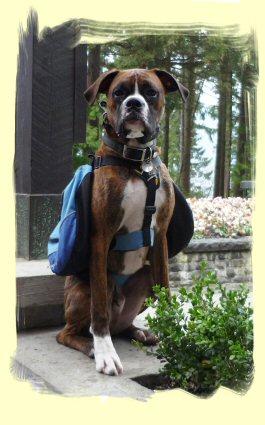 Dog Training, Port Moody, B.C.