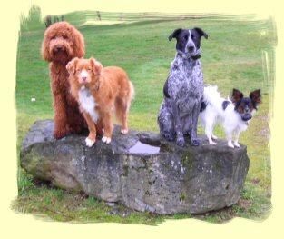 Dog Training Coquitlam