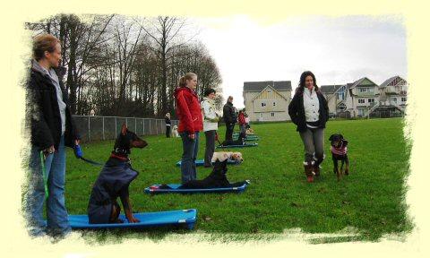 Vancouver Dog Training