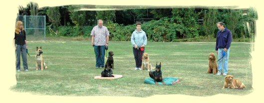Coquitlam Puppy Training