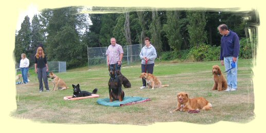 Vancouver Puppy Training