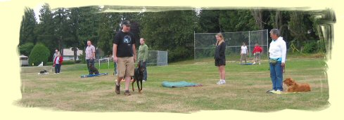 Port Moody Puppy Training