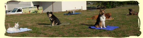 Dog Training, Vancouver, B.C.