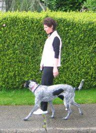 Dog Training Pitt Meadows