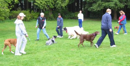 Dog Training West Vancouver