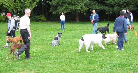 Burnaby Dog Trainer