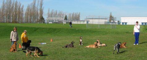 Port Moody Dog Trainer