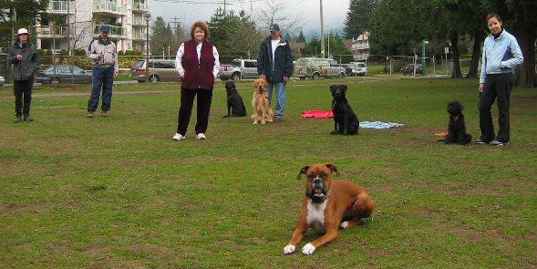 Coquitlam Dog Training