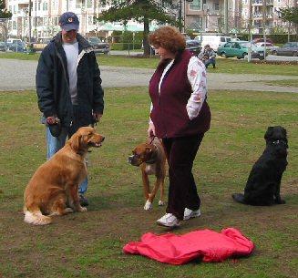 Port Coquitlam Dog Training
