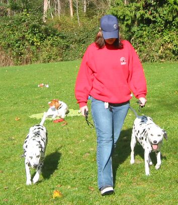 Dog Training Pitt Meadows