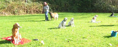 Dog Training, Burnaby, B.C