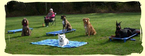 Dog Training Port Coquitlam, B.C.