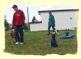 Dog Training Coquitlam