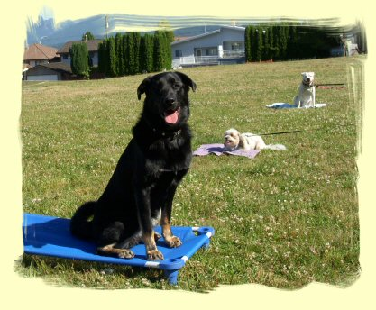Dog Training Burnaby