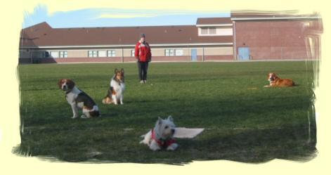 Dog Training Vancouver