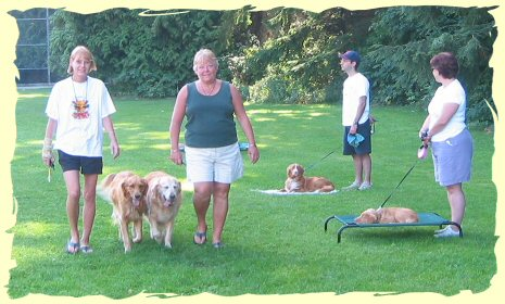 Puppy Training Port Moody