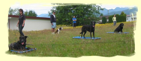 Dog Training Port Coquitlam