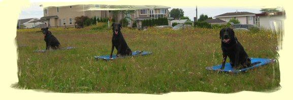 Puppy Training Coquitlam