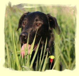 Puppy Training Pitt Meadows