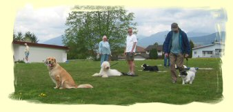 Puppy Training Burnaby