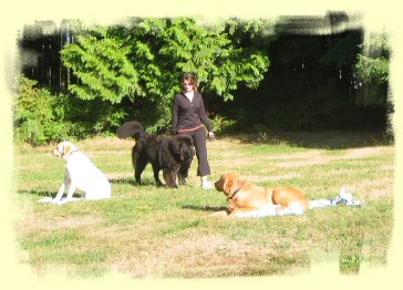 Puppy training Vancouver