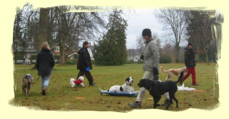 Puppy Training Maple Ridge