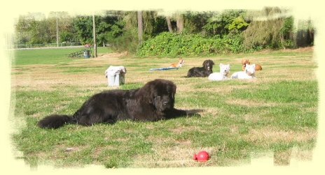 Obedience training Vancouver
