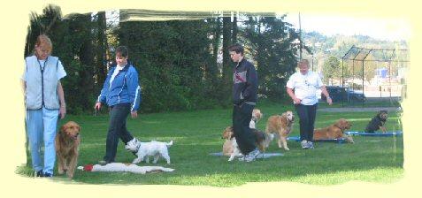 Puppy Training Maple Ridge