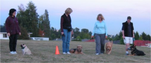Puppy training Vancouver, B.C.