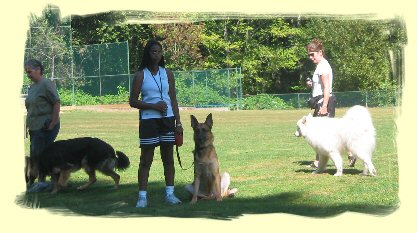 Vancouver Dog Trainer