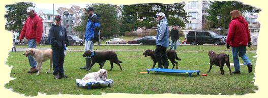 Puppy training Coquitlam