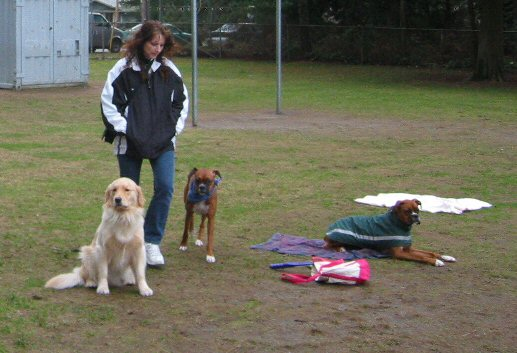 Dog Training, Port Moody, B.C.