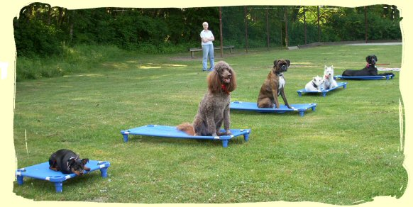 Dog Training, Langley, B.C.
