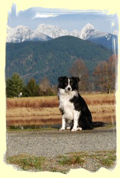 Dog Training, Maple Ridge, B.C.