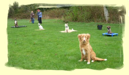 Dog Training, Coquitlam, B.C.