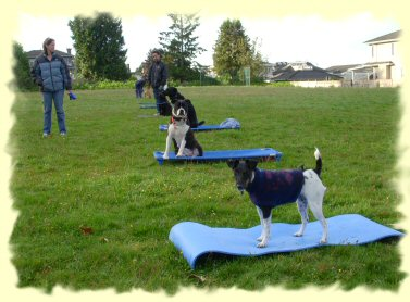 Dog Training, Burnaby, B.C.