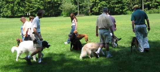 Dog obedience training Vancouver
