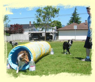 Puppy Training Pitt Meadows
