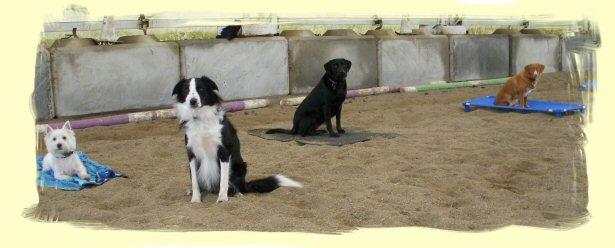 Dog Training, Coquitlam, B.C.