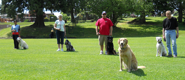 Vancouver Dog Obedience Training