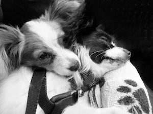 Puppy training Burnaby