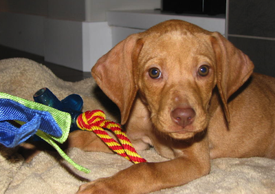 Dog Obedience Training Burnaby