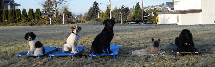 Dog Training Port Moody